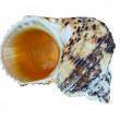 Shell on the white background. - Stock Photo
