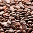 Cocoa beans background — Stock fotografie