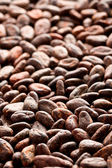 Cocoa beans background — Stock Photo