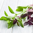 Varied basil leaves - Stock Photo