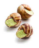 Snails with butter and parsley — Stock Photo