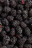 A lot of blackberries — Stock Photo