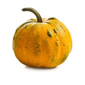 Small pumkin — Stock Photo