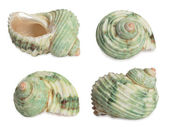 Set of sea shells. — Stock Photo