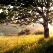 Stock Photo: Long grass and tree in morning light