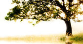 Single tree in motion with copy space — Stock Photo