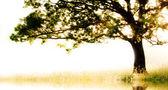 コピー スペースを持つ動きの単一のツリー — ストック写真