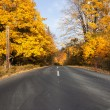 Road in autumn forest — Stock Photo #12336823
