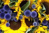 Allium and sunflowers — Stock Photo