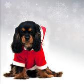 Marmaduke with snowflake background — Stock Photo
