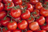 Fresh tomato background — Stock Photo