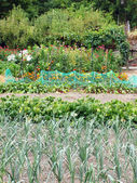A vegetable patch of home grown produce and flowers — Stock Photo