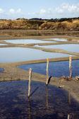 Salt marshes — Stock Photo