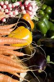 蔬菜组曲 — 图库照片