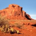 Monument Valley Cactus — Stock Photo