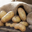 Potatoes 2 — Stock Photo #11915554