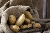 Potatoes 3 — Stock Photo