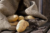Potatoes 4 — Stock Photo