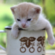 Kitten in pot — Stock Photo