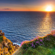 Stock Photo: Cliffs of Moher at sunset