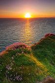 Moherské útesy při západu slunce — Stock fotografie