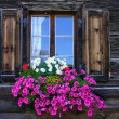 Flower window — Foto de Stock