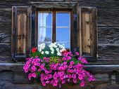 Blumen-fenster — Stockfoto
