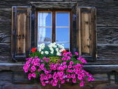 Kwiat okno — Zdjęcie stockowe