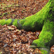 Foto de Stock  : Moss in forest