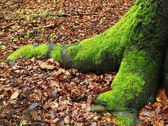 Moss in the forest — Stockfoto