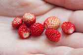 Wild strawberries on a woman's palm — Stok fotoğraf