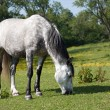 Stock Photo: Horse in meadow