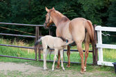 Mare and her foal — Stock Photo
