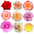 Assorted on rose blooms — 图库照片