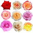 Assorted on rose blooms — Stok fotoğraf