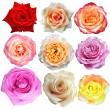 Diverse på Rosa blom — Stockfoto