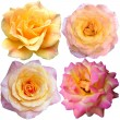 Set with a beautiful roses — Stockfoto