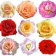 Set of 9 roses blooming — Stock Photo #11785071