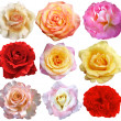 Set of 9 roses blooming - Stock Photo