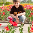 Stock Photo: The boy sitting next to the flowerbed with tulips