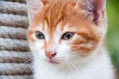 Porträtt av en ingefära kattunge på natur — Stockfoto