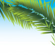 Palm branches - Stock Vector