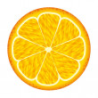 Orange fruit — Stock Vector #11580000