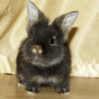 Rabbit — Stock Photo #11530257