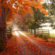 Misty Autumn Path — Stock Photo