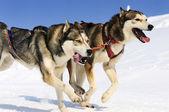体育狗 — 图库照片