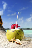Coconuts on the beach — Stockfoto