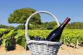 Vineyard in Beaujolais — Stock Photo