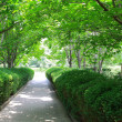 Many trees on both side of the path in park. — Stock Photo