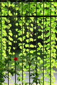巻雲の多くの緑 leafages — ストック写真
